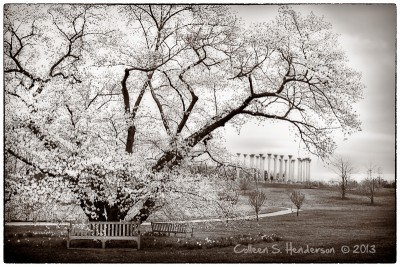 Cherry Tree & Capitol Calumns
